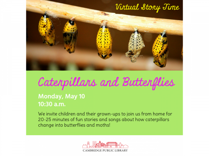 Event image for Virtual Story Time: Caterpillars and Butterflies